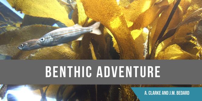 benthic-adventure